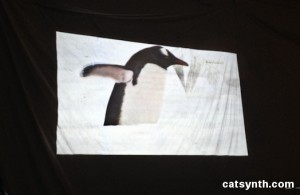 Penguin in Polar Ice Caps video