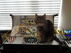 cat and buchla