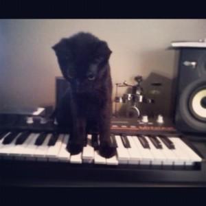 Ziggy on Synthesizer