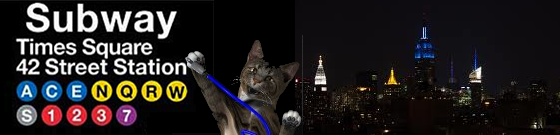 CatSynth NYC
