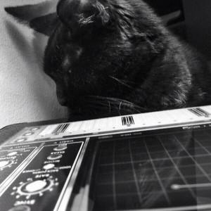 Cat and Animoog