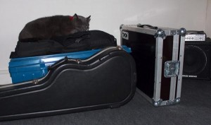 Jam session cat