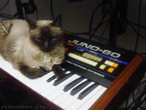 Mimi and Juno 60