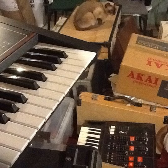 Cat with Moog Prodigy box and synths