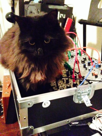 Cat and Eurorack - 3U 84ph