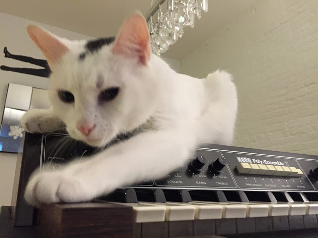 Uno Meow with Korg Poly-Ensemble