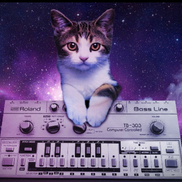 Cat with Roland TB-303 bass synth