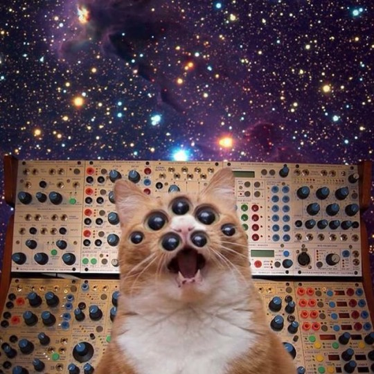Buchla Synthesizer and weird multi-eyed cat.