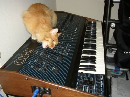 Tiger the cat and Oberheim OB-8 synthesizer