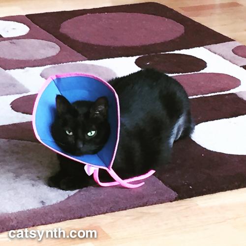 Luna with cone / bonnet.