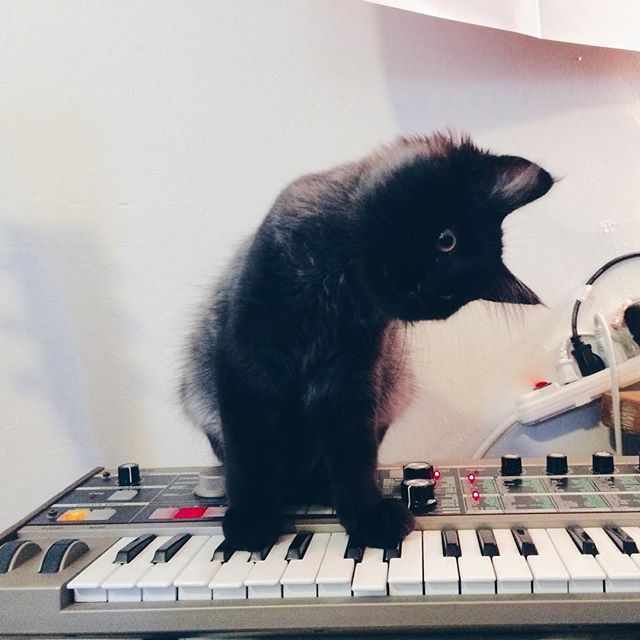 cat and microKORG