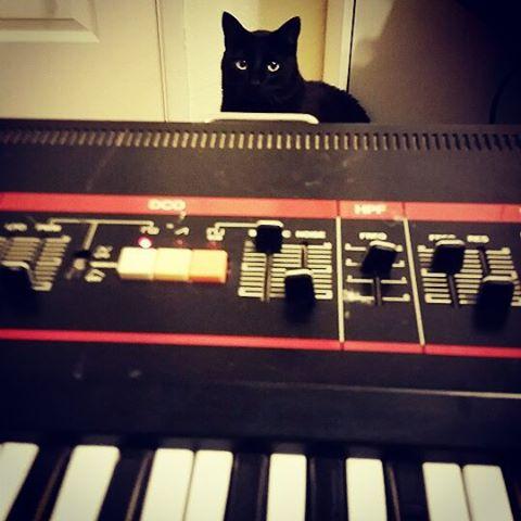 Roland Juno 60 and studio cat