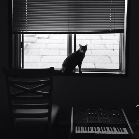 Enid the cat with an Octave CAT Synthesizer
