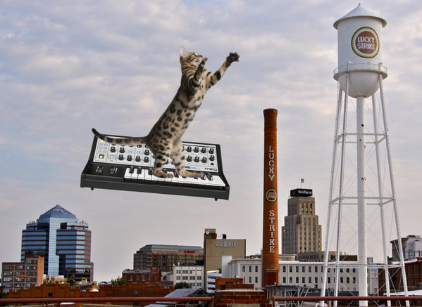 Cat on Moog Synthesizer in Durham