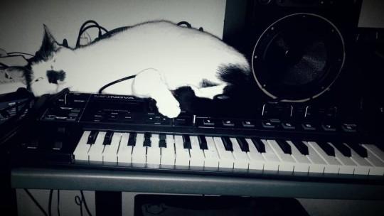 Cat and MiniNova Synthesizer