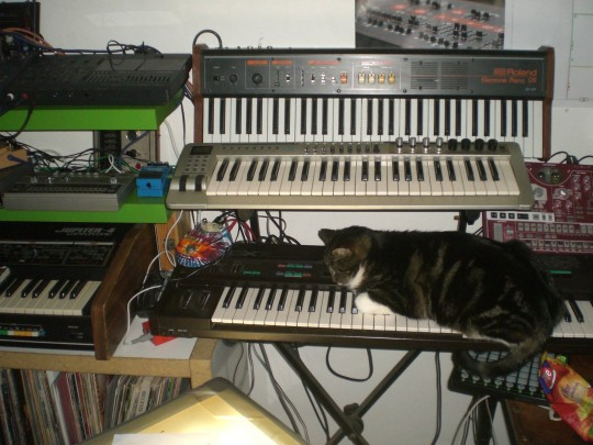 Cat sleeping on Yamaha DX7
