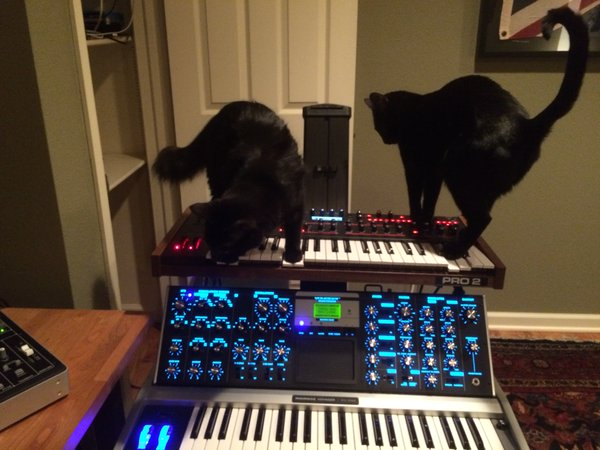 Black Cats, Moog Voyager, and DSI Pro 2
