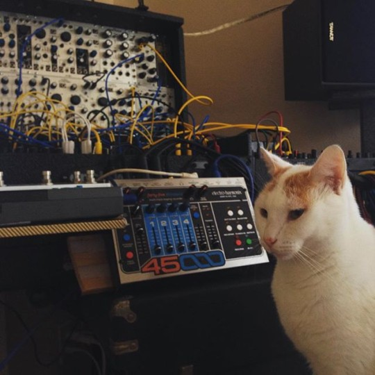 Cat and modular synth