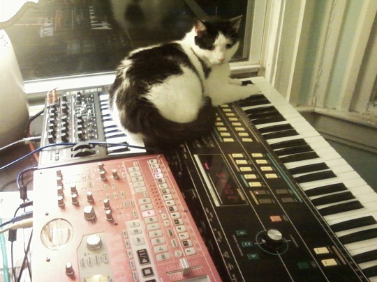 Cat on top of synthesizers