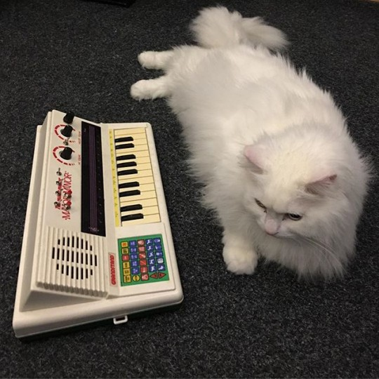 Mr. Fluff and circuit-bent keyboard.
