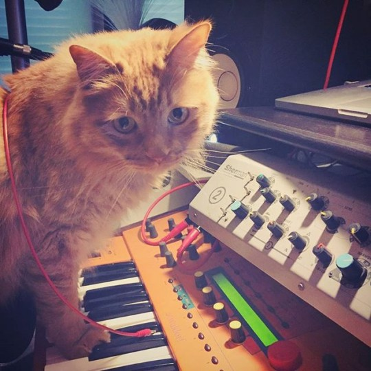 Cat with Sherman Filterbank and Waldorf synth