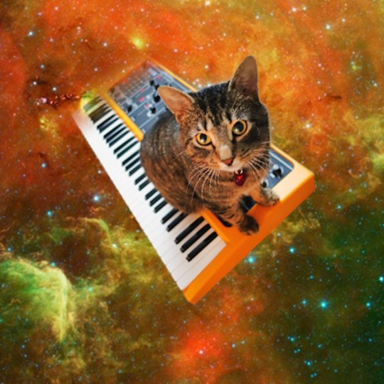 Rupert the cat and StudioLogic synthesizer