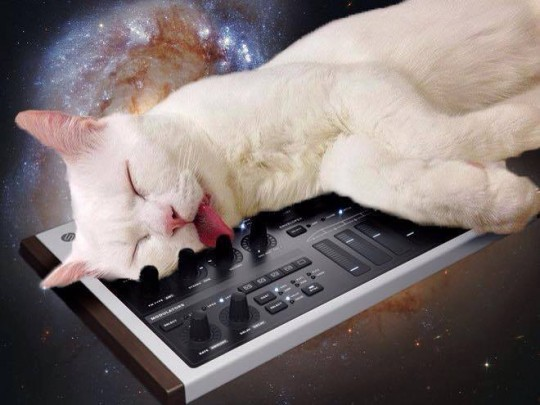 Cat on prototype synth in space