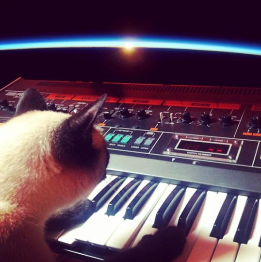 Cat on Jupiter 8