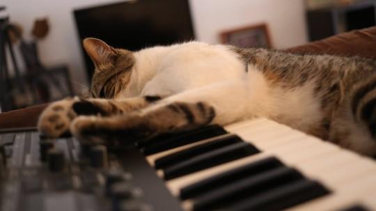 Castellanito on keyboard