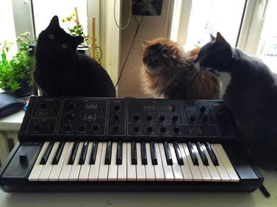 Cats and Yamaha CS5.