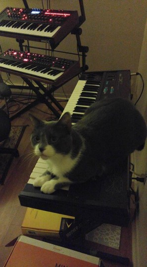 Cat, DX7 and DSI synths