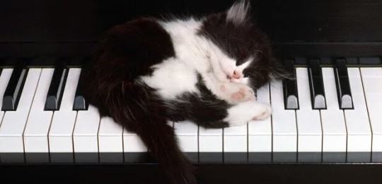 Kitten sleeping on piano keys