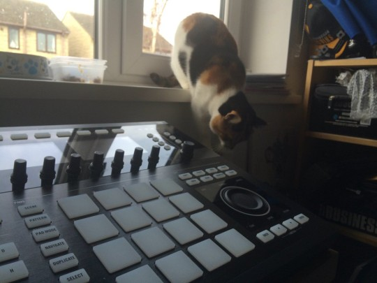 Cats and Studios