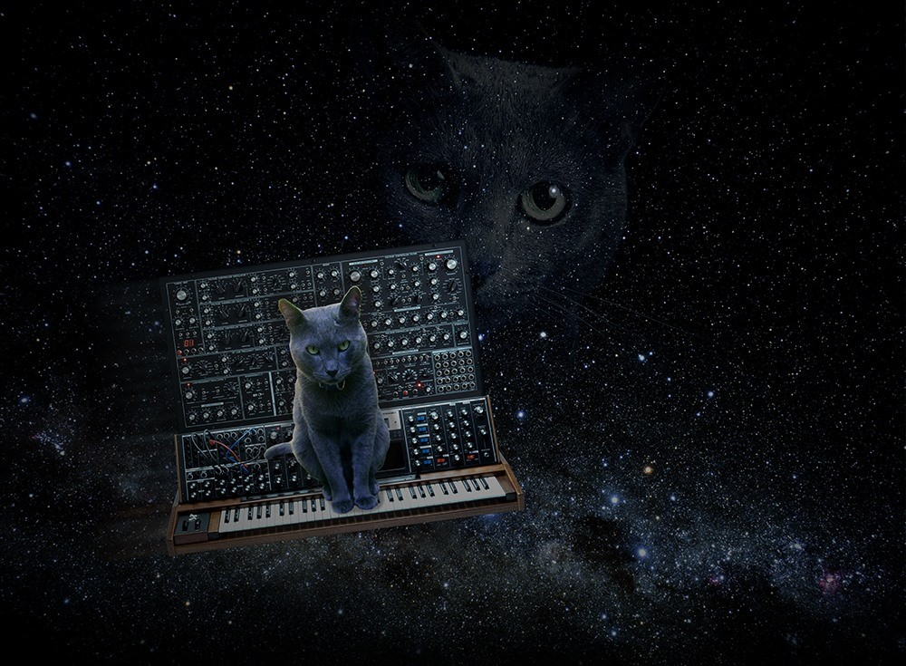 Cat on Moog Voyager with Eurorack