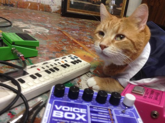 Keyboard Cat, VL-1, and pedals