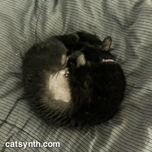Luna sleeping in a circle