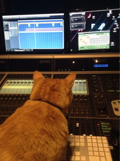 Studio Cat with Virus TI, Cubase, Kontakt