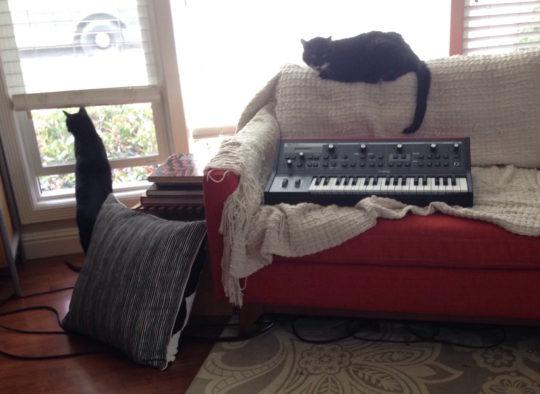 Cats and Moog Little Phatty