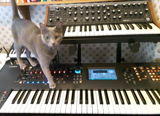 Sophie, Moog, and Yamaha
