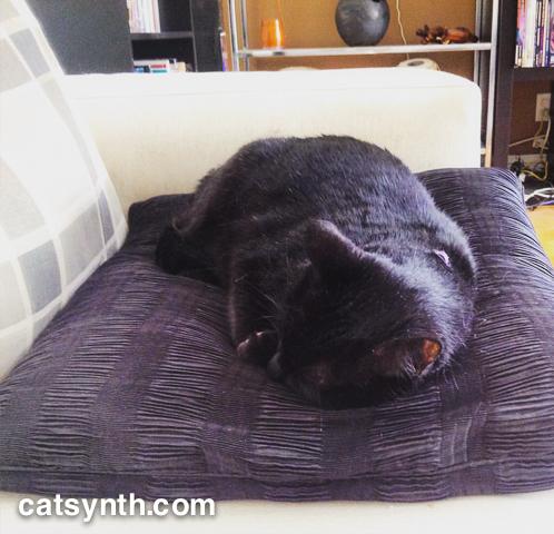 Luna napping